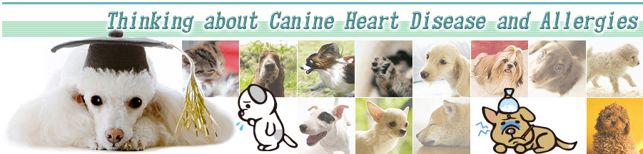 Thinking about Canine Heart Disease and Allergies